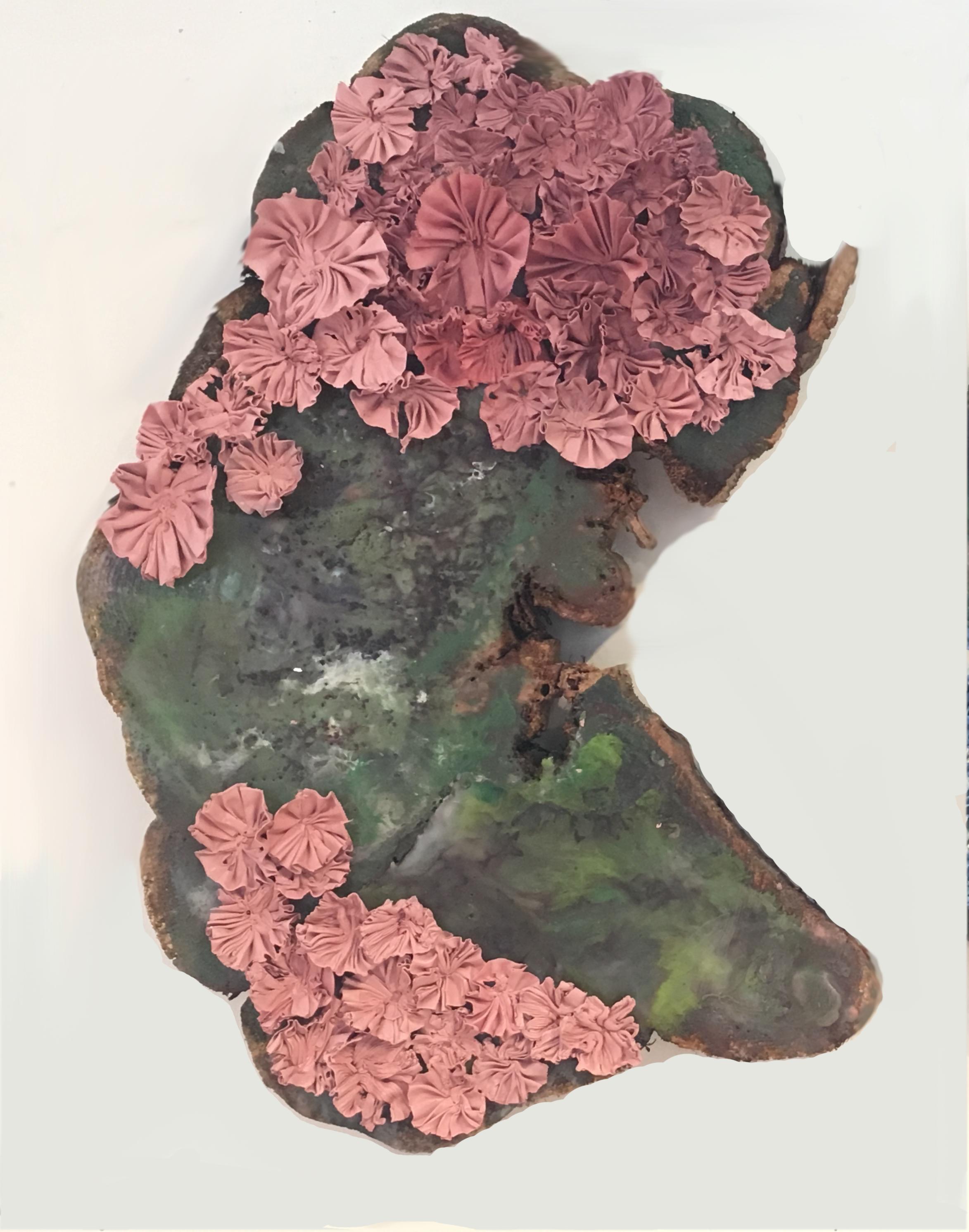 Scalloped Pink Mushrooms