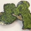 Largespore Map Lichen