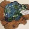 Many Colored Lichen