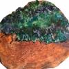 Green Scaly Lichen