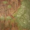 Lichen-covered Tree