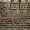 Three Birds on a Brick Wall